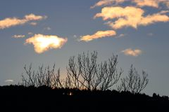 Shining clouds and tree branches in Pyrenees, France. Clouds lit by a sunset with branches in shadows in Pyrenees. Occitanie in south of France Royalty Free Stock Images