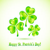 Shining clovers vector Patrick's day greeting card Royalty Free Stock Image