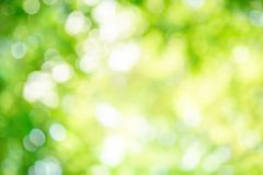 Shining defocused highlights in trees Stock Photos
