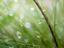 Shining dew on the grass. Beautiful shining dew on the grass Royalty Free Stock Photography