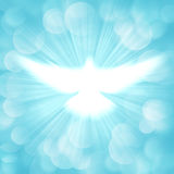 Shining dove with rays Stock Image