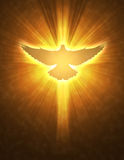Shining dove with rays on a dark Stock Photo