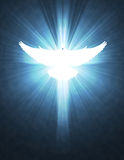 Shining dove with rays on a dark Royalty Free Stock Images