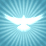 Shining dove with rays on a dark Stock Image
