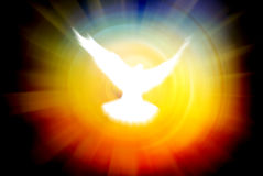 Shining dove Stock Photography