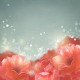 Shining flowers roses background Stock Image