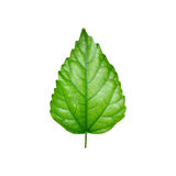 Shining green leaf. Soft colors Royalty Free Stock Photos