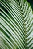 Shining leaf Stock Photos