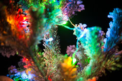 Shining lights of a natural Christmas tree covered Stock Image