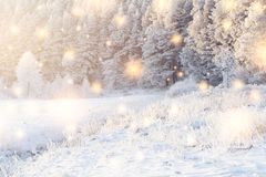 Shining magic snowflakes fall on snowy forest in sunlight. Christmas background. Winter nature landscape royalty free stock image