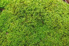 Shining moss on the rock. Light shining to Moss on the rock Royalty Free Stock Image
