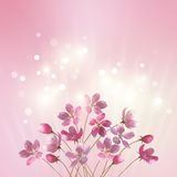 Shining pink flowers background Stock Image