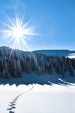 Shining sun Royalty Free Stock Image