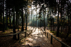 shining sun in forest Stock Image