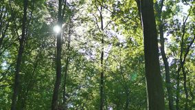 Shining sun through the green crowns of deciduous trees stock video