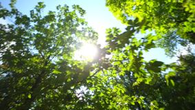 Shining sun through the green crowns of deciduous trees stock video footage