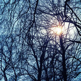 Shining sun with lens flare in bare trees silhouettes Stock Photography