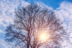 Shining sun through the tree crone. Stock Photos
