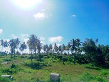 A shining sunny afternoon along the way. Shining sunny day along the way to the northern part of cebu, a field beside the national highway with coconut tress Royalty Free Stock Image
