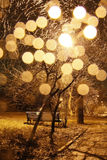 Shining tree. The tree lit up at night on the street Royalty Free Stock Photos