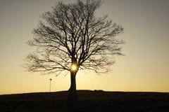 The shining tree Stock Image