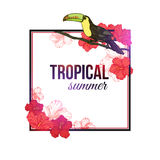 Shining tropical summer typographical background Stock Images