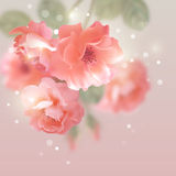 Shining vector flowers roses Stock Photos