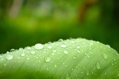 Shining water droplets on a green leaf Royalty Free Stock Image