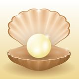 Shining white pearl in the shell Stock Images