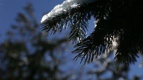 Shinings солнца Sping теплые через ветви дерева и понижаясь падения плавя снег в ландшафте горы зимы slowmotion сток-видео