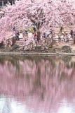 Shinjuku garden, Tokyo Royalty Free Stock Photography