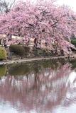 Shinjuku garden, Tokyo Royalty Free Stock Photo