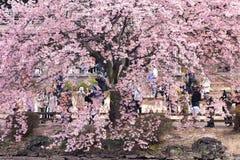 Shinjuku garden, Tokyo Stock Photo