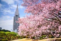Shinjuku Gyoen Park in the Springtime Stock Photos