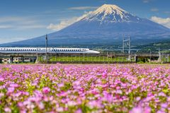 Shinkansen bullet train pass Mountain fuji. Shizuoka, Japan - May 05, 2017: JR Shinkansen transport through Mt. Fuji and Shibazakura at spring. N700 Bullet train royalty free stock image