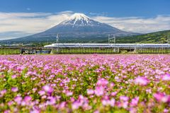 Shinkansen N700 and Mount Fuji. Shizuoka, Japan - May 05, 2017: Shinkansen or JR Bullet train run pass through Mount Fujisan and Shibazakura at spring Stock Photos