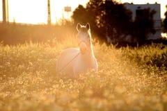 Shinning häst arkivfoton