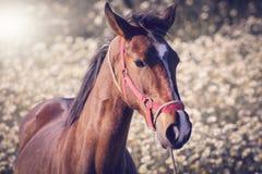 Shinning häst arkivbild