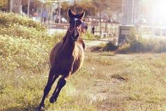 Shinning häst royaltyfria foton