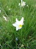 Shinny il fiore Immagine Stock