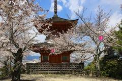 Shinto tempel på den Miyajima ön som omges av sakura blomningträd, Japan royaltyfri foto
