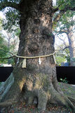Shinto tree shrine with rope around the tree. Royalty Free Stock Photos