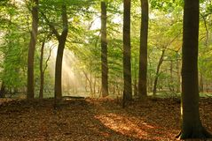Shiny. Morning sun shines through leaves Royalty Free Stock Photos