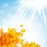 Shiny autumn Royalty Free Stock Photos