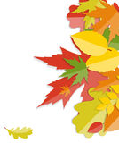 Shiny Autumn Natural Leaves Background. Vector Stock Image