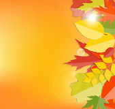 Shiny Autumn Natural Leaves Background. Vector Royalty Free Stock Photo