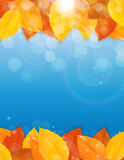 Shiny Autumn Natural Leaves Background. Vector Illustration. EPS10 Royalty Free Stock Photography