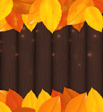 Shiny Autumn Natural Leaves Background. Vector Illustration. EPS10 Royalty Free Stock Photos
