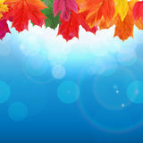 Shiny Autumn Natural Leaves Background. Vector Illustration. EPS10 vector illustration