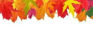 Shiny Autumn Natural Leaves Background. Vector Illustration Royalty Free Stock Image